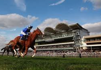 Newmarket streaming live